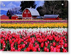Skagit Valley Acrylic Print by Benjamin Yeager
