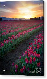 Skagit Valley Blazing Sunrise Acrylic Print by Inge Johnsson