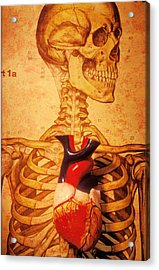Skeleton And Heart Model Acrylic Print by Garry Gay