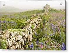 Skomer Wildflowers Acrylic Print by Anne Gilbert
