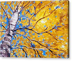 Sky Birch Acrylic Print by Nancy Merkle