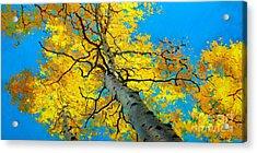 Sky High 3 Acrylic Print by Gary Kim