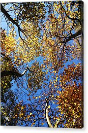Sky Is The Limit Acrylic Print by Lucy D