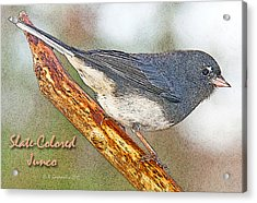 Acrylic Print featuring the photograph Slate-colored Junco Poster Image by A Gurmankin