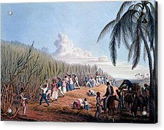 Slaves Cutting The Cane, From Ten Views Acrylic Print by William Clark