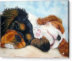 Sleeping Cavalier Puppies Acrylic Print by Toulla Hadjigeorgiou