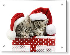 Sleeping Kittens In Presents Acrylic Print by Greg Cuddiford