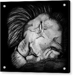 Sleeping Lion Acrylic Print by Saki Art
