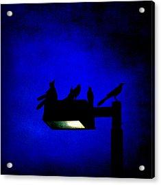 Sleepless At Midnight Acrylic Print by Trish Mistric