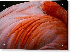 Sleepy Flamingo Acrylic Print by Andres Leon