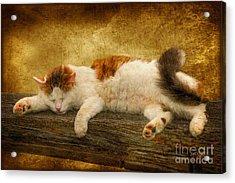 Sleepy Kitty Acrylic Print by Lois Bryan