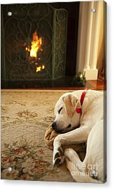 Sleepy Puppy Acrylic Print by Diane Diederich