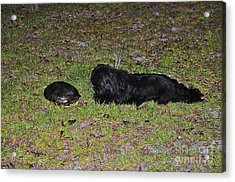 Slider And Shih-tzu Acrylic Print by Al Powell Photography USA