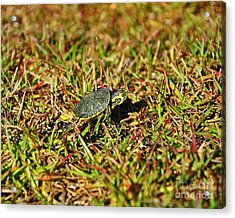 Slider To Go Acrylic Print by Al Powell Photography USA