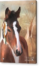 Small Chief Little Feathers Acrylic Print by Trudi Simmonds