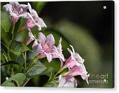 Small Flowers Acrylic Print by Joy Watson