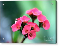 Small Red Flower Acrylic Print by Henrik Lehnerer
