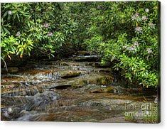 Small Stream In West Virginia With Mountain Laurel Acrylic Print by Dan Friend