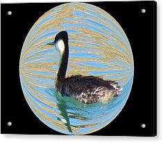 Small World Acrylic Print by Feva  Fotos
