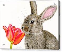 Smells Like Spring Acrylic Print by Sarah Batalka
