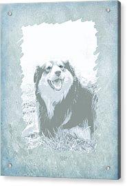 Smile Acrylic Print by Ann Powell