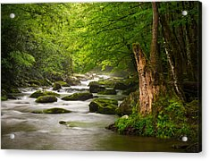 Smoky Mountains Solitude - Great Smoky Mountains National Park Acrylic Print by Dave Allen