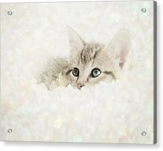 Snow Baby Acrylic Print by Amy Tyler