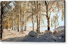 Snow Birches  Acrylic Print by Zina Stromberg