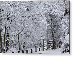 Snow Canopy Acrylic Print by David Birchall