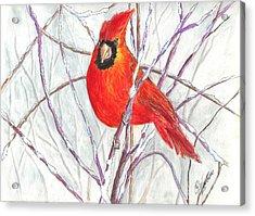 Snow Cardinal Acrylic Print by Carol Wisniewski