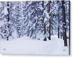Snow-dappled Woods Acrylic Print by Don Schwartz