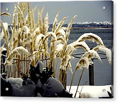 Snow Dust Acrylic Print by Karen Wiles