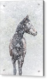 Snow Flurry Acrylic Print by Pamela Hagedoorn