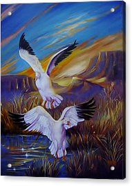 Snow Geese Acrylic Print by Sherry Strong