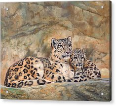 Snow Leopards Acrylic Print by David Stribbling