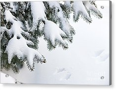 Snow On Winter Branches Acrylic Print by Elena Elisseeva