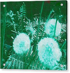 Snowballs In The Garden Acrylic Print by Pepita Selles