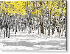 Snowy Aspen Landscape Acrylic Print by The Forests Edge Photography - Diane Sandoval
