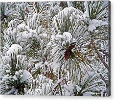 Snowy Pine Needles Acrylic Print by Aimee L Maher Photography and Art Visit ALMGallerydotcom