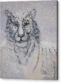 Snowy White Tiger Or Chairman Of The Board Acrylic Print by Phyllis Kaltenbach