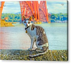 Snuggles The Cat Acrylic Print by Tylie Duff
