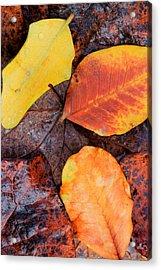 So Cal Autumn Acrylic Print by Heidi Smith