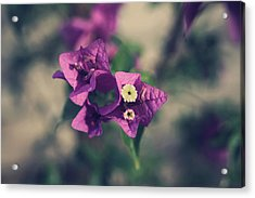 So Real That It Makes Me Wanna Cry Acrylic Print by Laurie Search