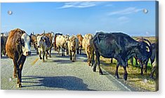 So This Is What Farm To Market Road Means - Panoramic Acrylic Print by Gary Holmes