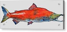 Sockeye Salmon Acrylic Print by Juan  Bosco