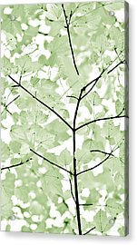 Soft Forest Green Leaves Melody Acrylic Print by Jennie Marie Schell