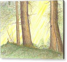 Soft Light Acrylic Print by Lew Davis