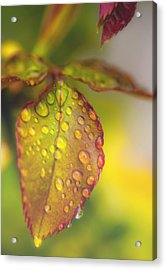 Soft Morning Rain Acrylic Print by Stephen Anderson