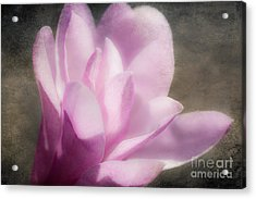 Soft Violet Flower - Greensboro North Carolina Acrylic Print by Dan Carmichael