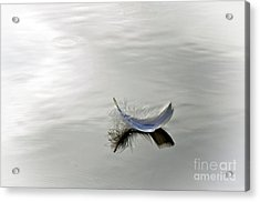 Softly Floating Acrylic Print by Gayle Johnson